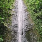 manoa falls & musubi | honolulu, hawaii